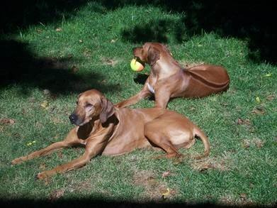 dogs before artificial grass
